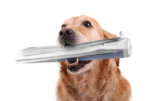 РФ может потерять право на ввоз домашних животных в ЕС