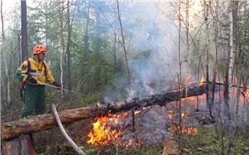 В Красноярском крае зарегистрировали 10 лесных пожаров площадью в шесть тысяч футбольных полей