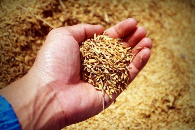 РФ возобновляет торги зерном из интервенционного фонда