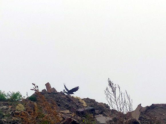 Жители Красногвардейского района наткнулись на очередную нелегальную свалку