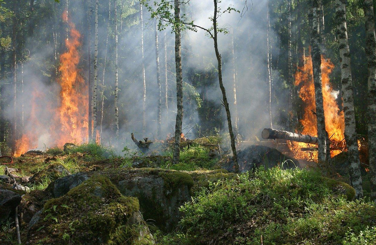 Лесные пожары приводят к выбросу опасных металлов в атмосферу