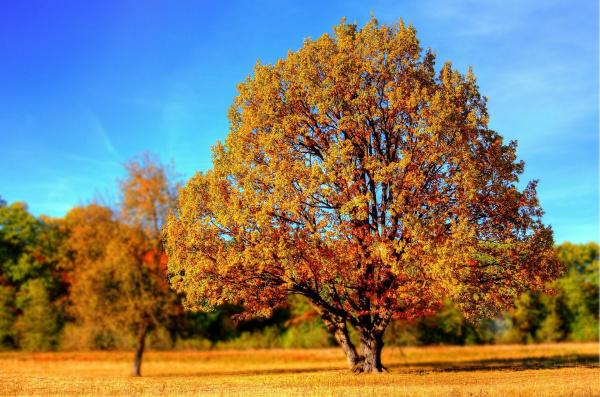 Золотая осень: конец недели в Самарской области ожидается ясным и теплым